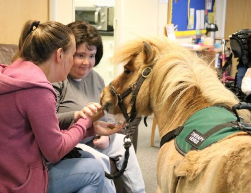 Marty the Therapy Horse visits The Opportunities Programme